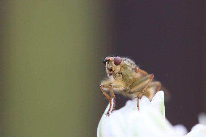 Fruchtfliegen Loswerden Wie Du Fruchtfliegen Am Besten Loswirst
